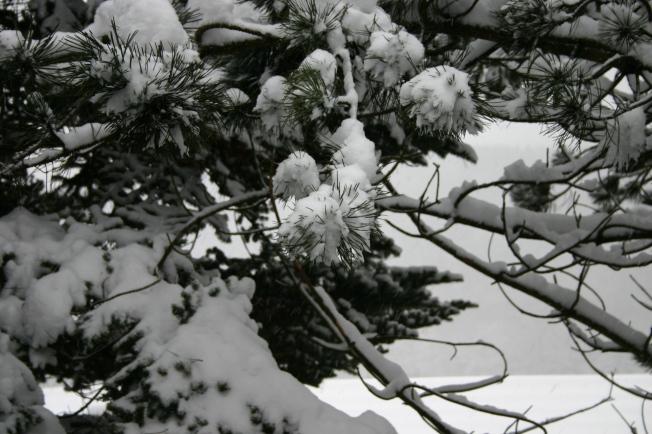 SnowThursday17thJan3