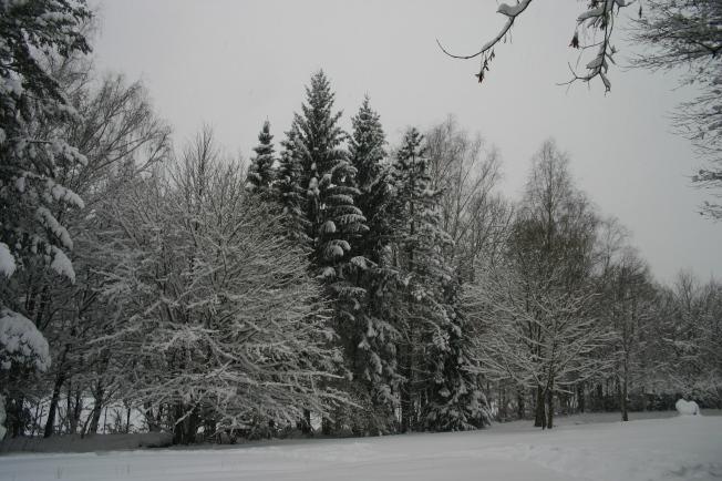 SnowThursday17thJan4