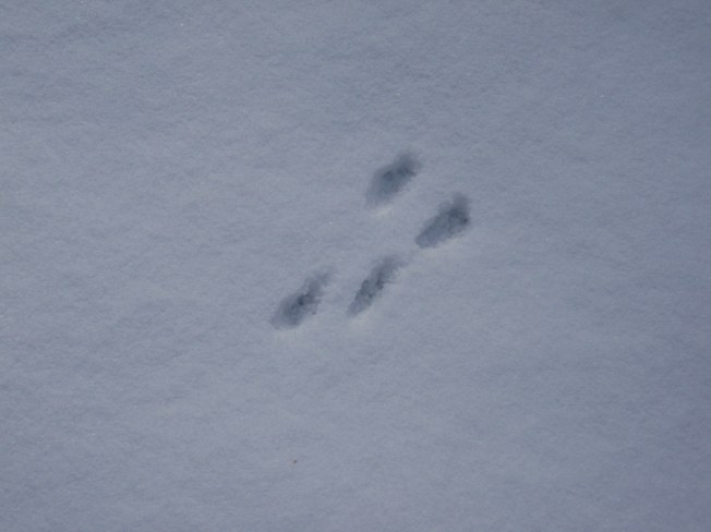 Squirrelprints
