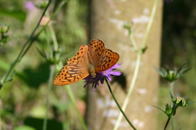 Butterfly2012