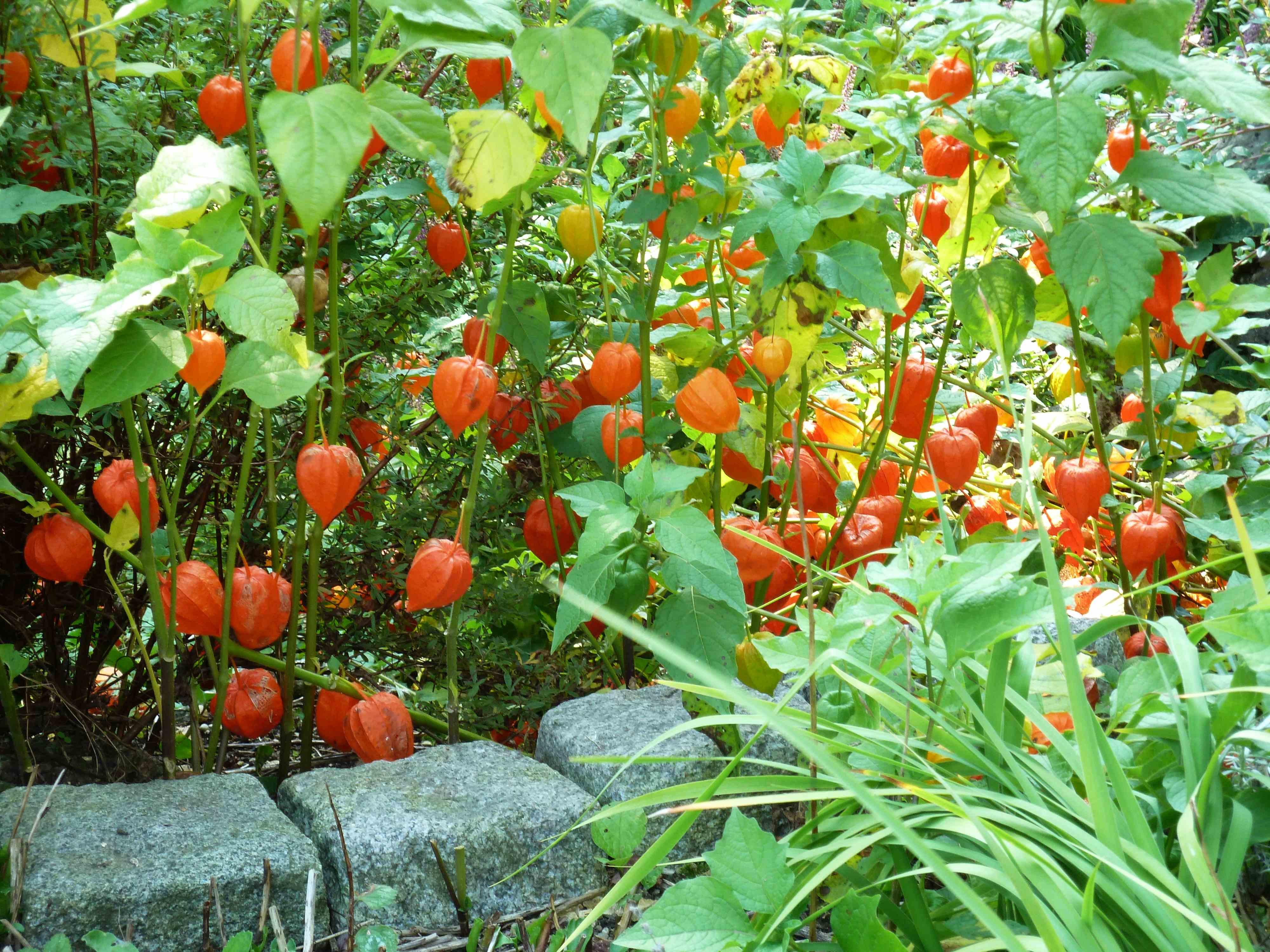 Как выращивать рассаду - когда и как сажать, посев и 71