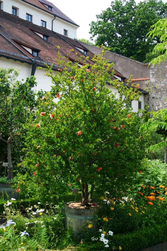 Pomegranite