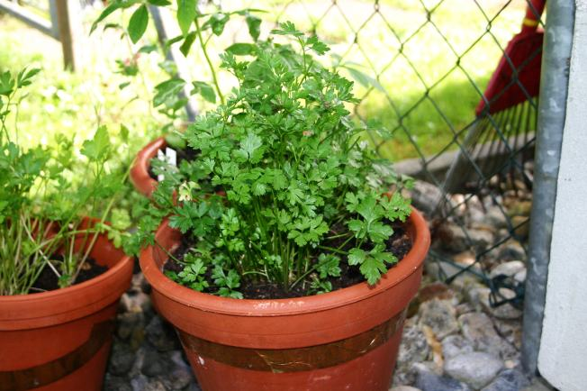 PoorParsley