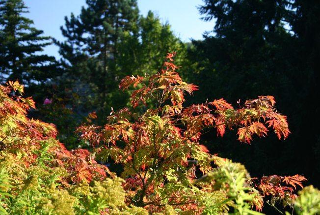 AutumnColour2