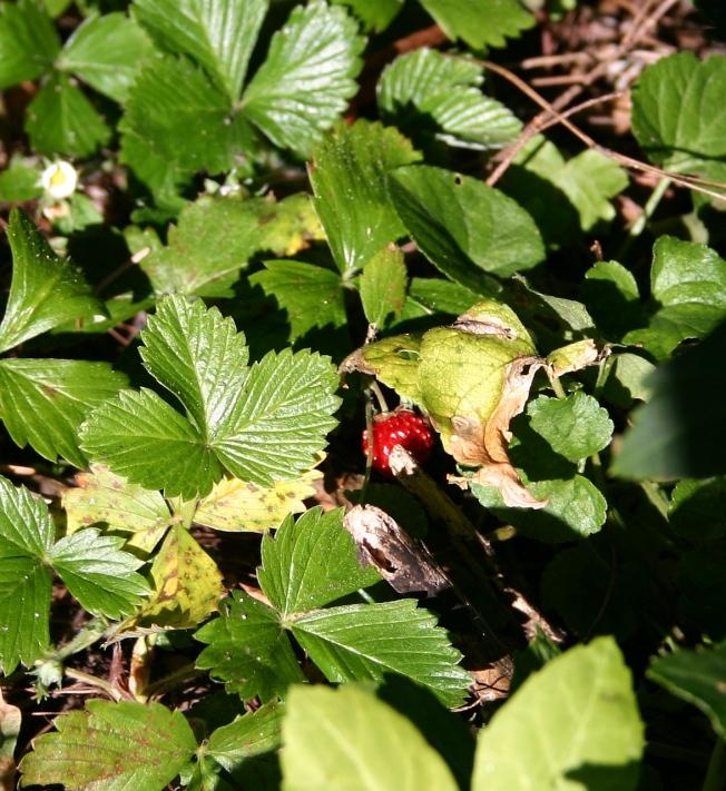 StrawberryinOctober