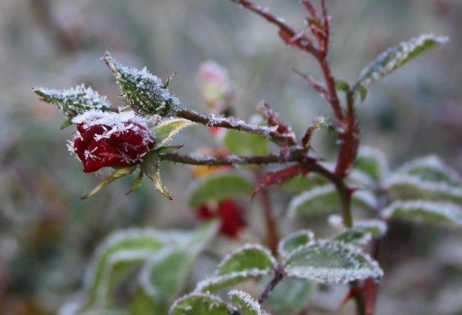 FrostyMorn2