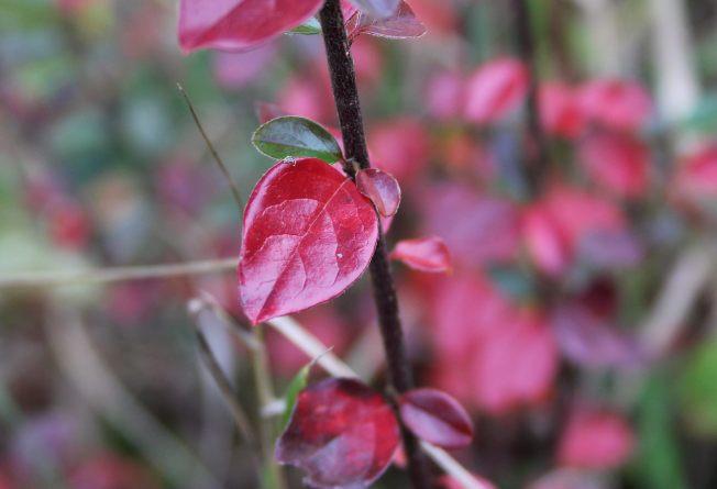 NovemberFoliage