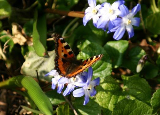 ButterflyBounty