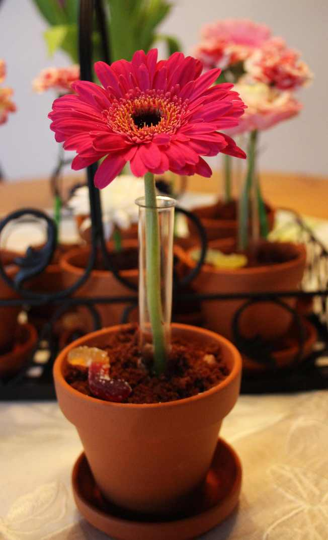 FlowerPots1
