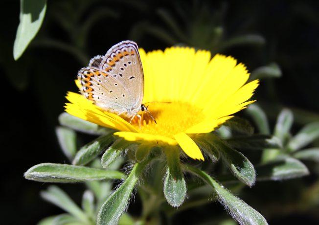 ButterfliesJune3