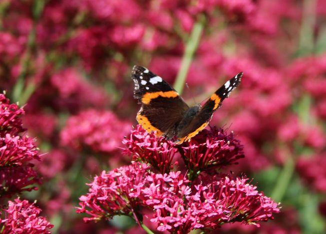 ButterfliesJune5