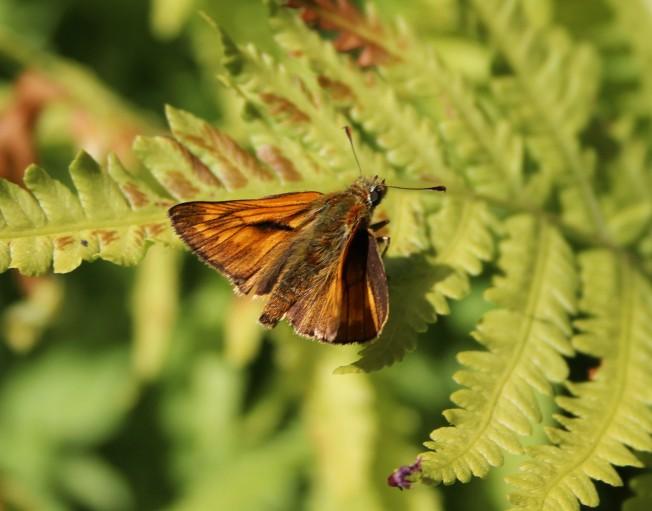 ButterfliesJune81Large