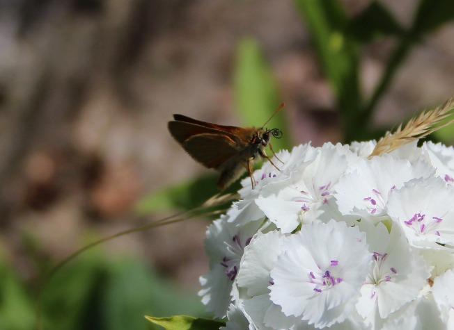 ButterfliesJune91