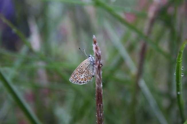 ButterflyIn Rain