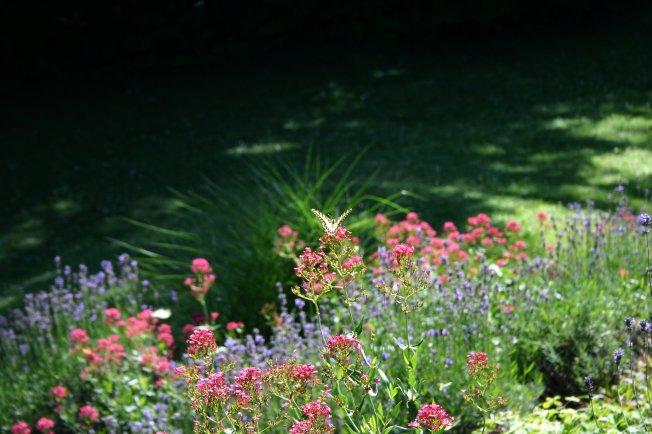 Swallowtail 2012