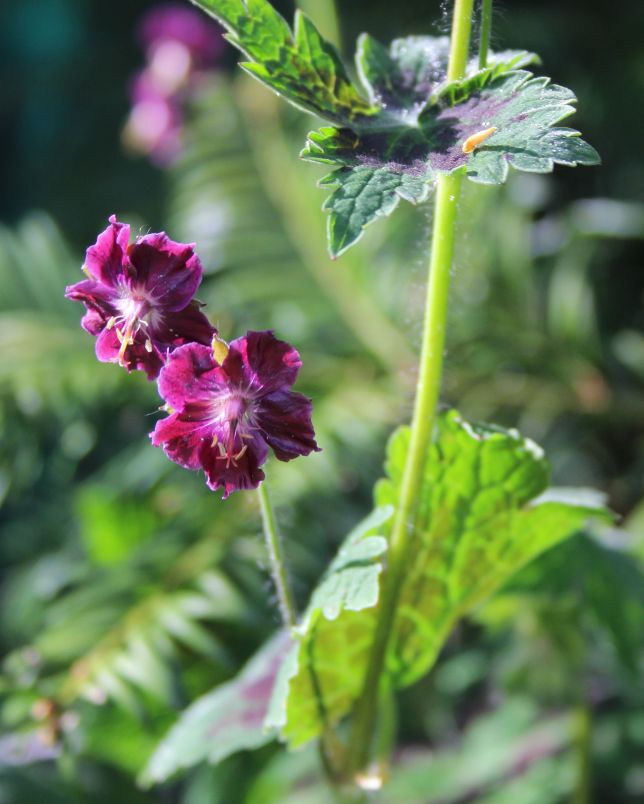 GardenReview2014April6