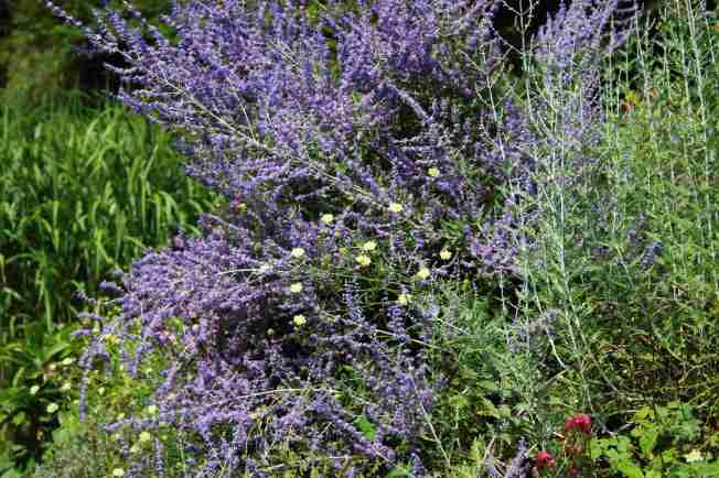 GardenReview2014August2
