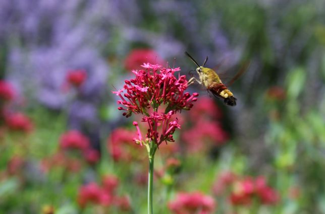 GardenReview2014July3