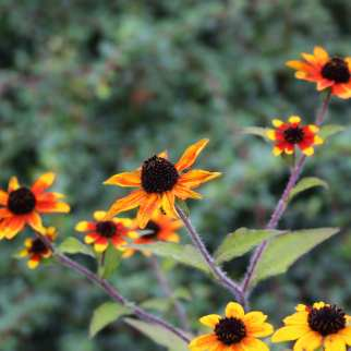 GardenReview2014September5