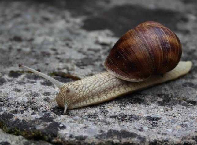 Snails2