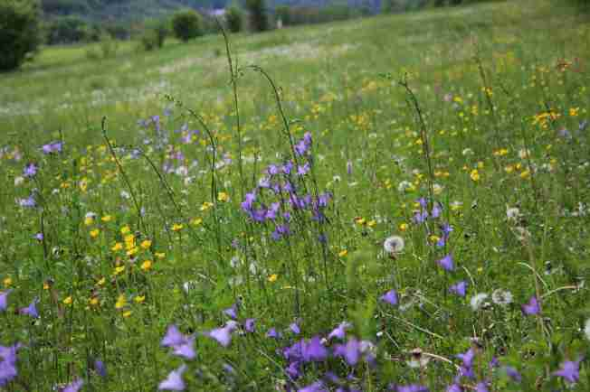 A Meadow in May