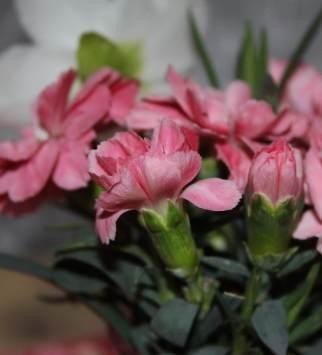 Vase11th3