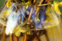 A bee on the back of the vase