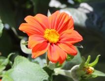SunflowerVase5