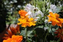 SunflowerVase6