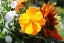 SunflowerVase7
