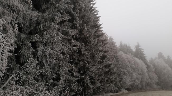 frosty22nd