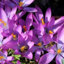 cropped-springheader.jpg