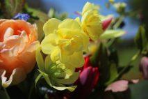 Narcissus 'Yellow Cheerfulness'